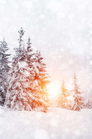 mountain snow: Beautiful winter landscape with snow covered trees Stock Photo