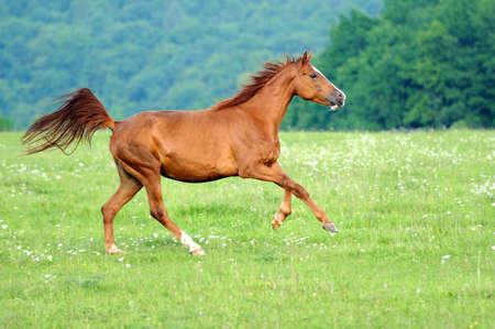 Horse Imagens