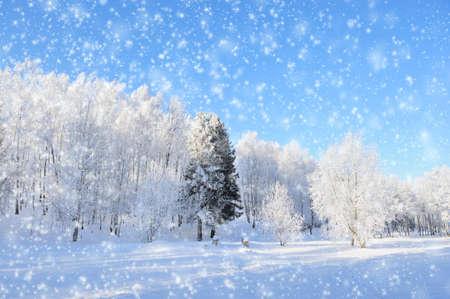 sleet: Winter park in snow in sunny day Stock Photo