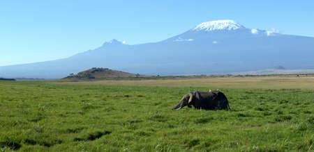kilimanjaro: Female elephant with Mount Kilimanjaro in the background Stock Photo