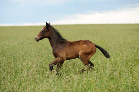 synchronously: Horses on a meadow in summer day