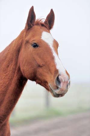 potrait: Horse potrait
