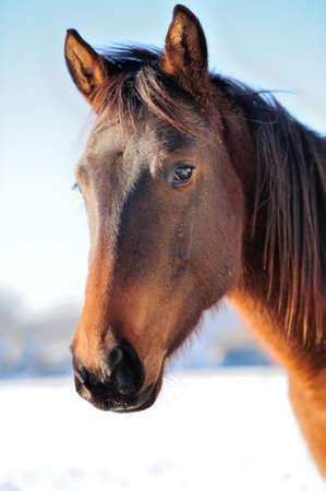cabeza de caballo: Retrato del caballo del primer en el fondo del cielo Foto de archivo