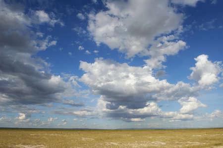 paisagem: Savannah paisagem no parque nacional no Quênia