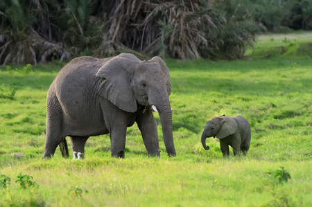 Elefanten in der Wildnis - Nationalpark Kenia Standard-Bild - 40237635