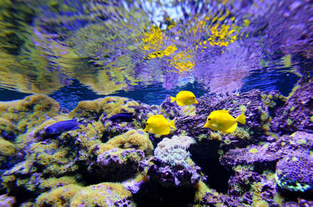 red coral colony: Underwater scene, showing different colorful fishes swimming
