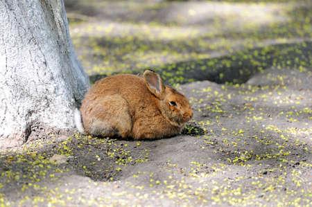 under a tree: Rabbit sitting under a tree in spring