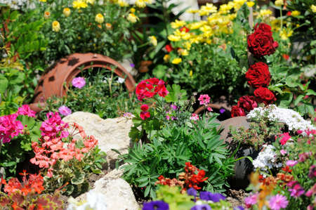 landscape garden: Lush landscape garden with flower bed and colorful plants