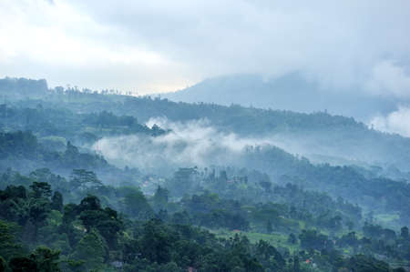 scenic view: Forest and fog in the morning. Sri lanka island