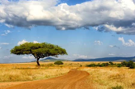 the national flag of kenya: Hermoso paisaje con árboles en África