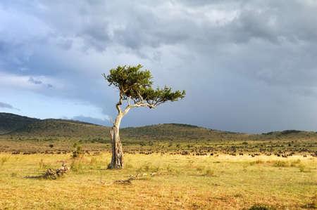 아프리카에서 나무와 아름 다운 풍경