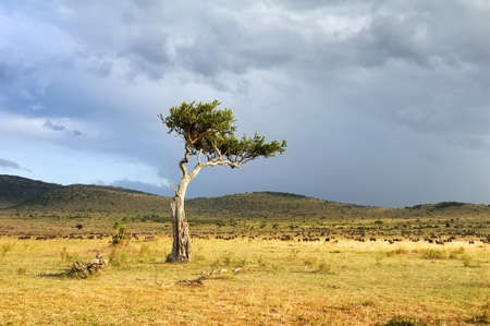 east africa: Beautiful landscape with tree in Africa Stock Photo