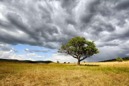 acacia: Beautiful landscape with tree in Africa Stock Photo