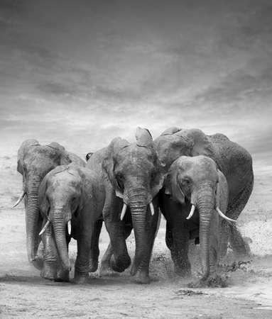 ELEFANTE: Elefante en el lago. Parque Nacional de Kenia, África