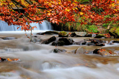 waterfall: Autumn forest waterfall and rocks with yellow leaves