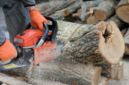 Close-up of male hands cutting trunk with chainsaw