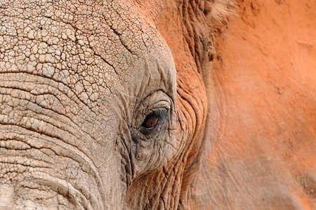 ELEFANTE: Elefante en el parque nacional de Kenia, África