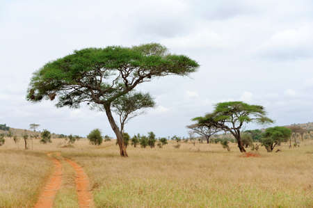 africa tree: Beautiful landscape with tree in Africa Stock Photo