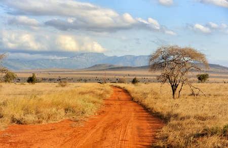 Schöne Landschaft mit Baum in Afrika Lizenzfreie Bilder - 47013554