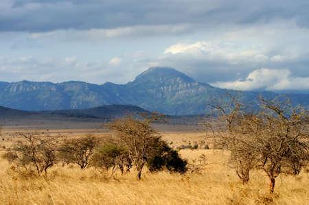 tsavo: Landscape in Tsavo National Park, Kenya, Africa