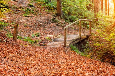 bridge in nature: Bridge and road in autumn forest. Autumn landscape