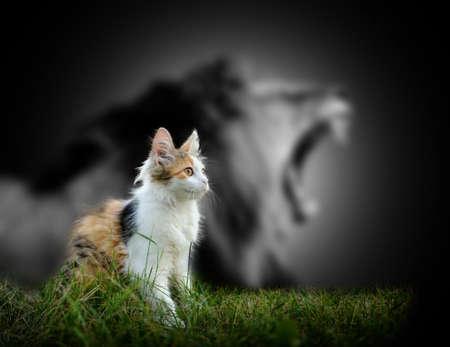 Kleine Katze mit großen wütend männlichen Löwen Schatten Lizenzfreie Bilder - 49212313