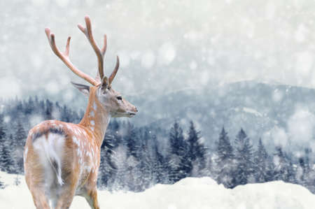 Big male deer on winter mountain backgroundwith snowfalls