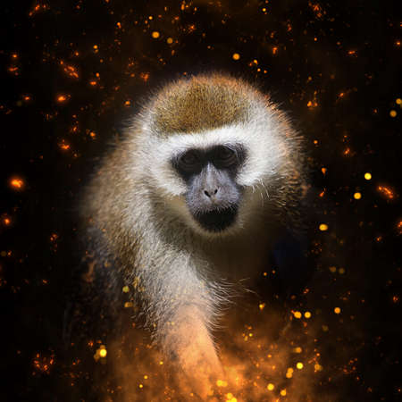 monkey face: Monkey portrait in fire on dark background Stock Photo
