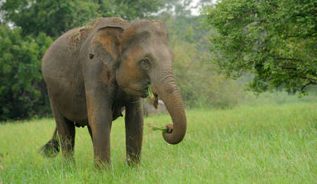 big family: Elephants in National Park of Sri Lanka