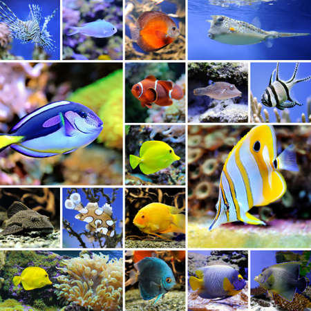 Collage of underwater photos Collection of tropical fishes