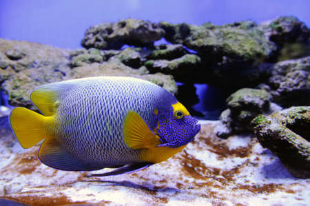 colorful fishes: Underwater scene, showing different colorful fishes swimming