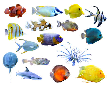 Great collection of a tropical fish on a white background Archivio Fotografico