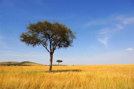 アフリカの木と美しい風景 写真素材