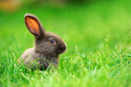 Kleines Kaninchen auf grünem Gras im Sommer Tag