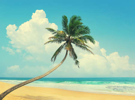 bent over: Palm tree bent over the ocean