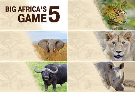 africana: Big five africa - Lion, Elephant, Leopard, Buffalo and Rhinoceros