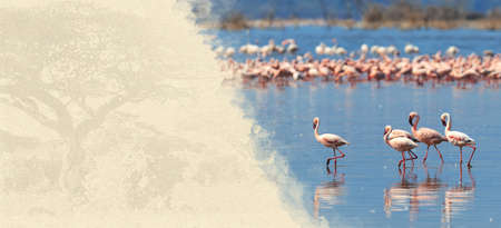 water animal bird card  poster: Flamingos on textured paper. Animal on a background of old paper