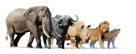 Wielka Piątka Afryki wyizolowanych na białym - lwa, słonia, lamparta, nosorożca i Buffalo