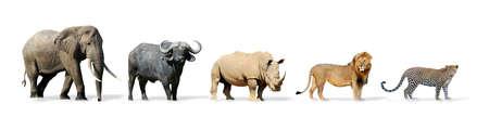 사자, 코끼리, 표범, 버팔로와 코뿔소 - 빅 5 게임 흰색으로 격리