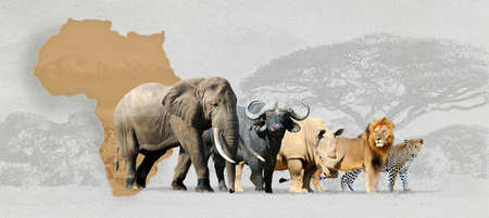Big Five Africa - leone, elefante, leopardo, rinoceronte e Buffalo Archivio Fotografico - 57827749