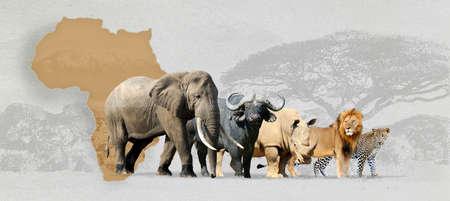 Wielkiej piątki Afryki - lwa, słonia, lamparta, nosorożca i Buffalo