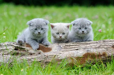 Three gray kitten in the green grass Stock Photo