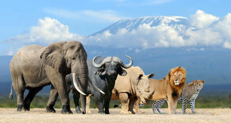 south africa nature: Big five africa - Lion, Elephant, Leopard, Buffalo and Rhinoceros