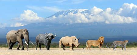 Cinco grandes de África - león, elefante, leopardo, búfalo y rinoceronte