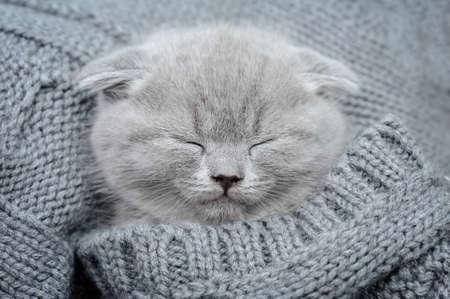 Cute gray funny kitten sleep in gray cloth Standard-Bild
