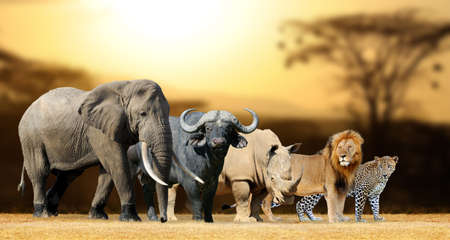 Big fünf Afrika - Löwe, Elefant, Leopard, Büffel und Nashorn Standard-Bild - 59731346