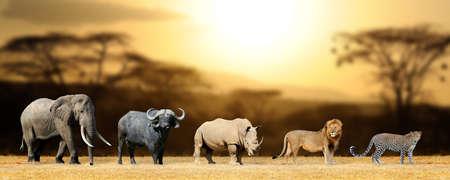 ビッグ 5 アフリカ ・ ライオン...