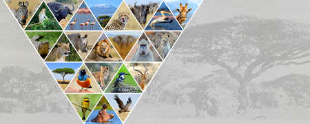 Photo collage african animals. Travel concept