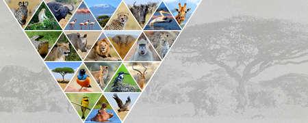 Fotocollage Afrikaanse dieren. reisconcept