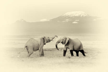 kilimanjaro: Elephant with Mount Kilimanjaro in the background. Vintage effect Stock Photo